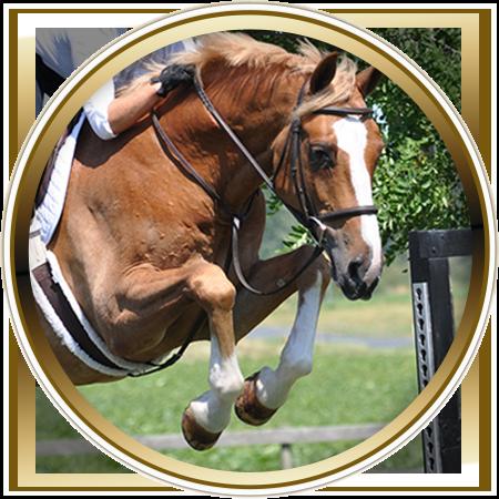 lochside-lane-horse-sales-victoria-manchester-featured
