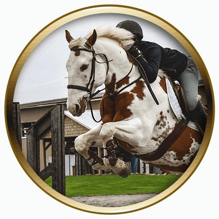 lochside-lane-horse-sales-victoria-cruise-control-featured-450x450