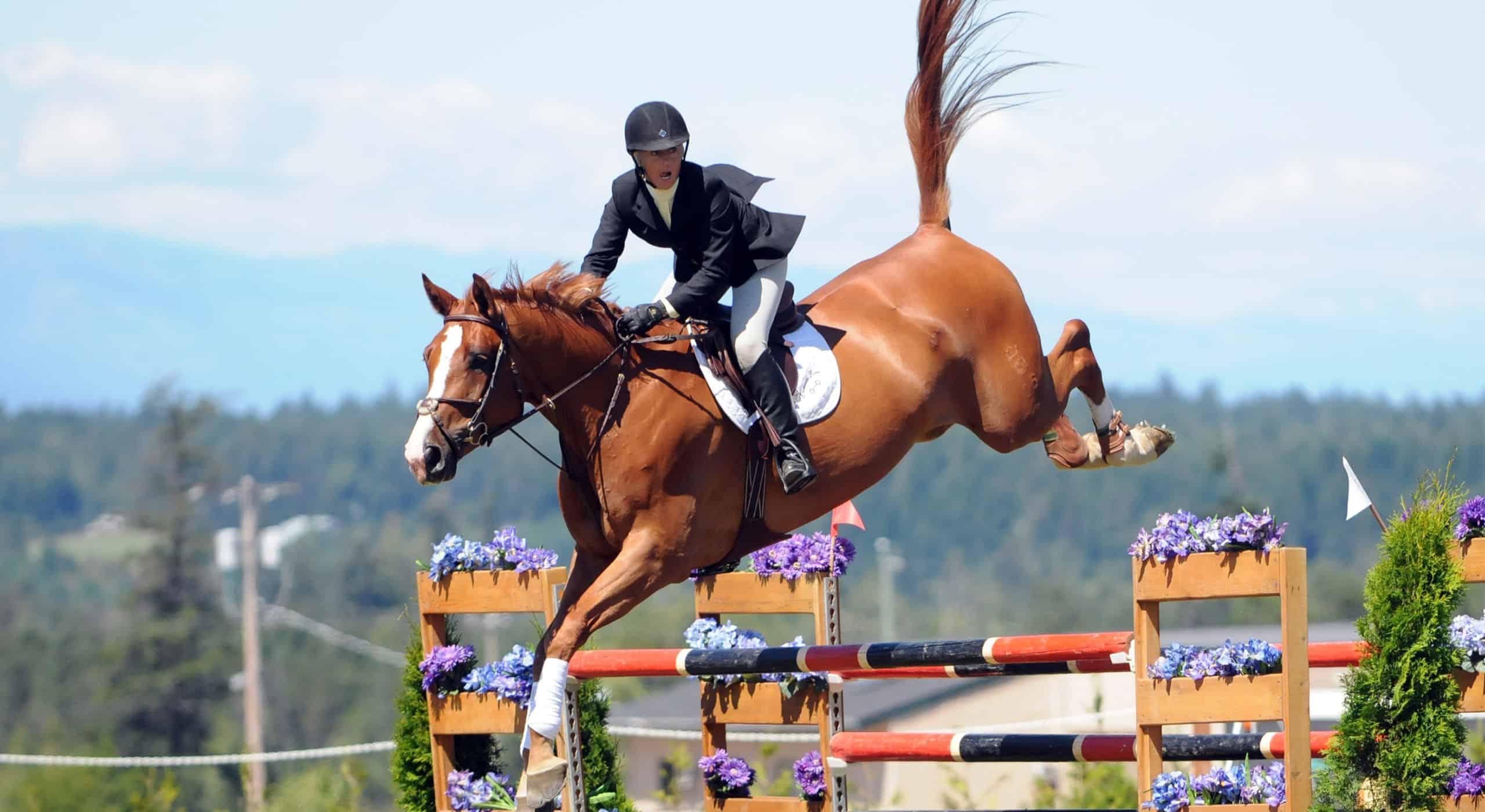 lochside-lane-horse-sales-victoria-homepage-slider10-25602