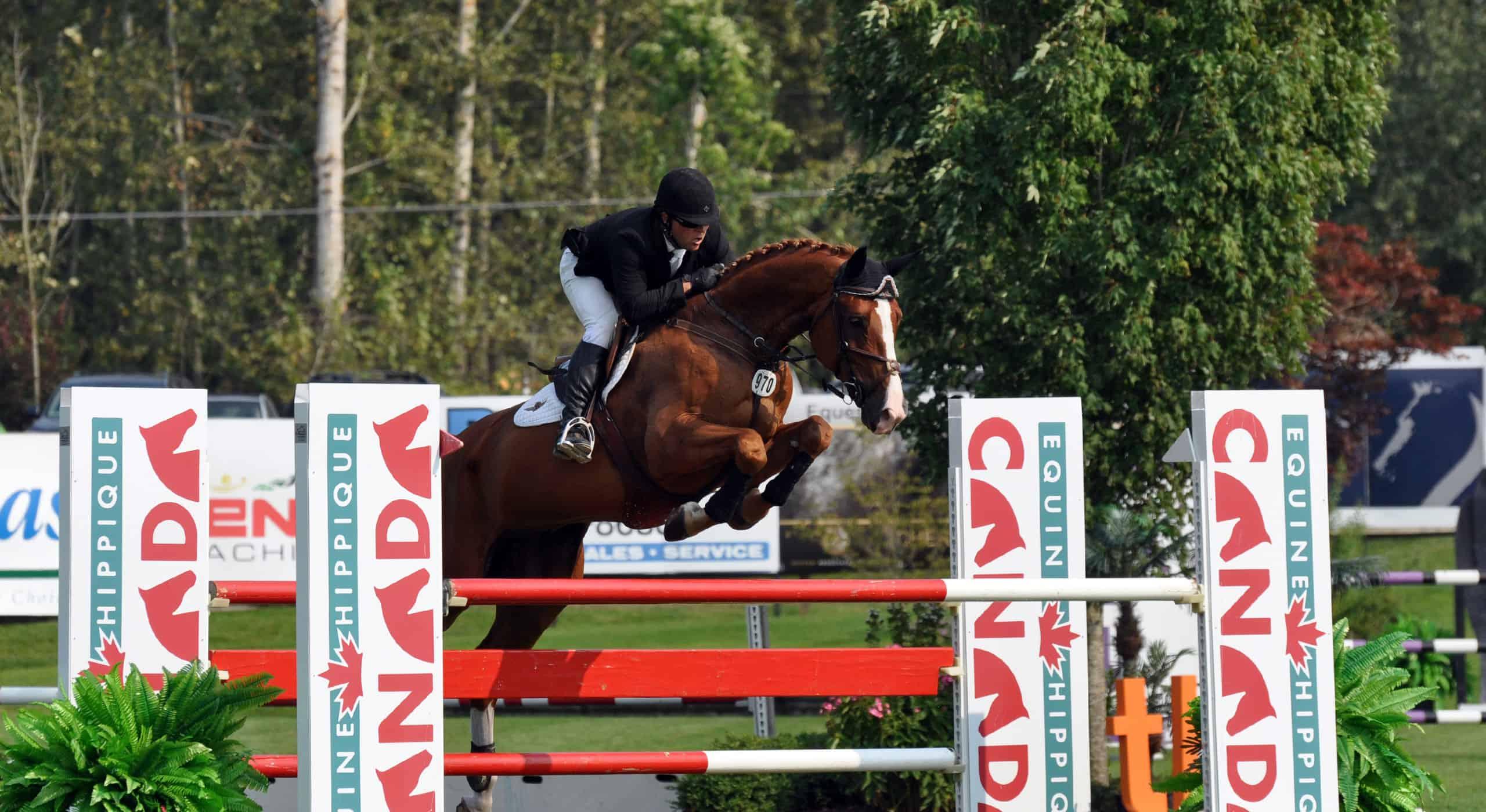 lochside-lane-horse-sales-victoria-homepage-slider6-25602