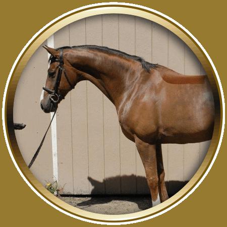 lochside-lane-horse-sales-victoria-quastro-featured-450x450