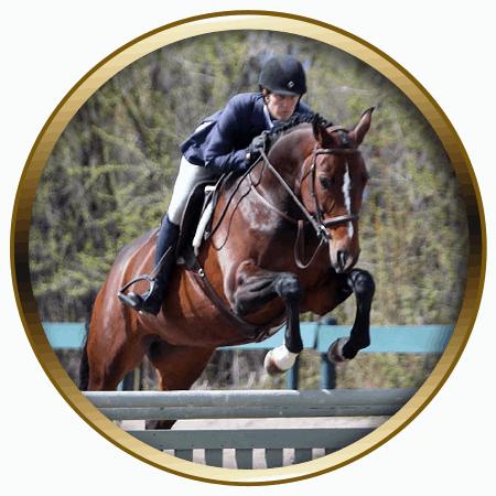 lochside-lane-horse-sales-victoria-soliel-featured-450x450