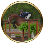 lochside-lane-featured-horse-sale-01