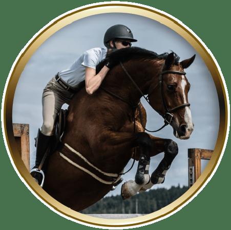 lochside-lane-featured-horse-sale_clara