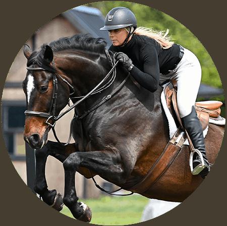 horse frame